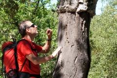 wandelroute-andalusie-sierra-grazalema-rio-campobouches-04
