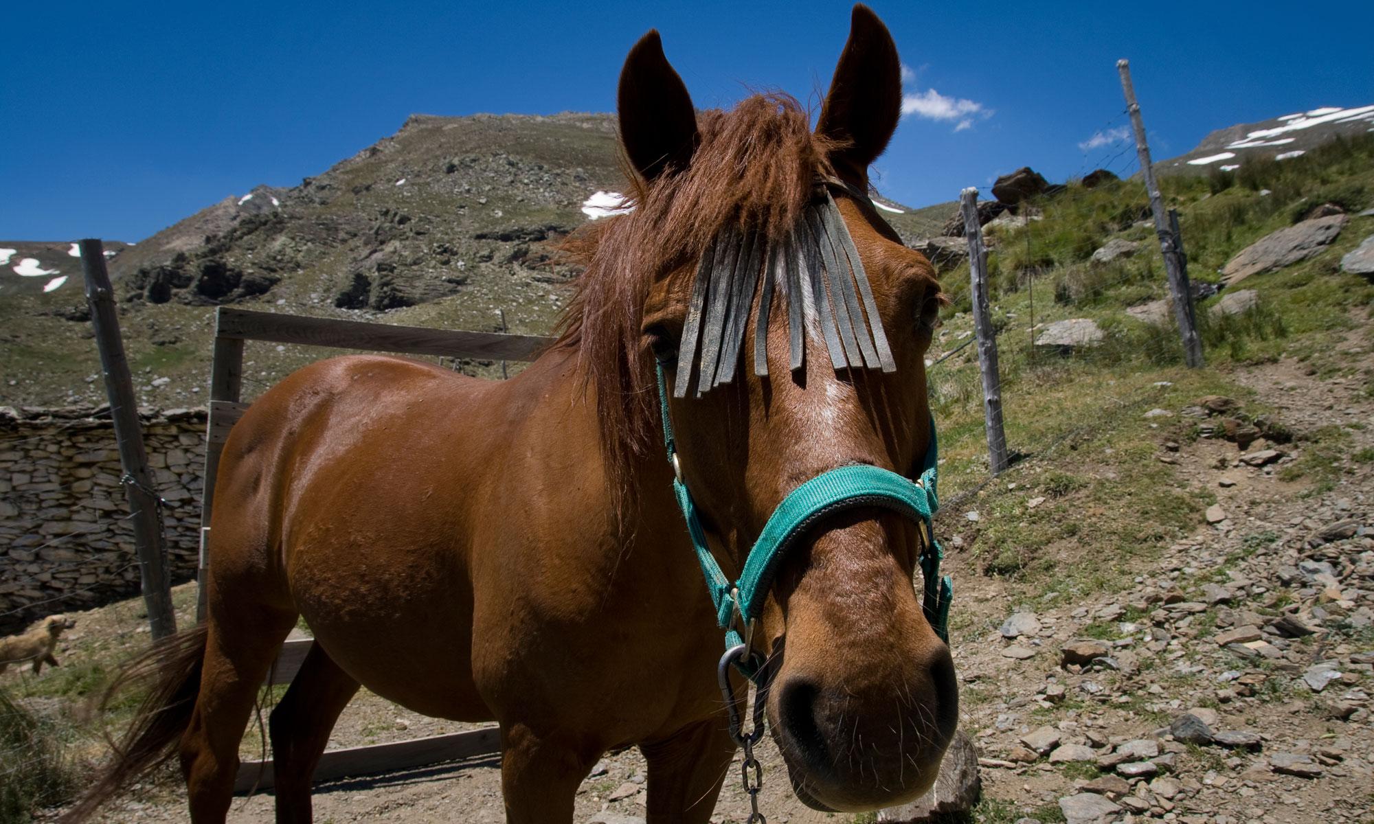 Paard in Alpujarras